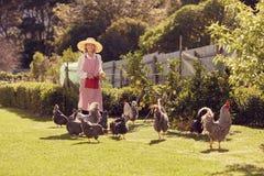 Ältere Frau in ihrem Hinterhof mit Freilandhühnern Stockbilder