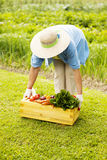 Ältere Frau im Garten Stockfoto