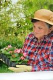 Ältere Frau - im Garten arbeitend Lizenzfreie Stockfotografie