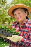Ältere Frau - im Garten arbeitend Stockbild