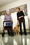 Ältere Frau mit gehendem Hund der von mittlerem Alter Frau. Stockfotos