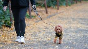 Ältere Frau mit Hund auf einem Weg in einem Herbstwald stockfoto