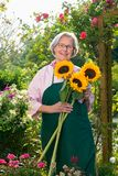 Ältere Frau mit Sonnenblumen im Garten Stockfotografie
