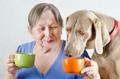 Ältere Frau und Hund Stockbilder