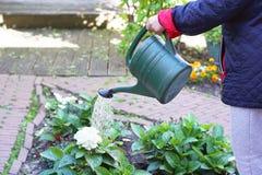 Ältere Frau wässert Blumen in ihrem Garten lizenzfreie stockbilder