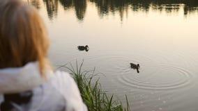 Ältere ältere Frauen-Fütterungsenten auf dem Teich 4K, Slowmotion stock footage
