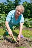 Ältere Frauen im Garten mit der Erdbeere Lizenzfreie Stockfotos