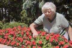 Ältere Frauengartenarbeit Stockbild
