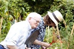 Ältere Gärtner stockbilder