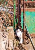 Ältere Katze mit ausgestrecktem Zungensitzen lizenzfreie stockbilder