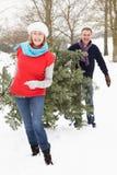 Ältere Paar-tragender Weihnachtsbaum im Schnee Lizenzfreies Stockbild
