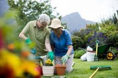 Ältere Paarbewässerungsanlage Lizenzfreie Stockbilder