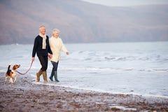 Ältere Paare, die entlang Winter-Strand mit Schoßhund gehen