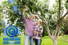 Ältere Paare mit Apfelbaum am Sommer arbeiten im Garten Lizenzfreie Stockfotografie