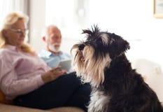 Ältere Paare mit Hund zu Hause stockfotos