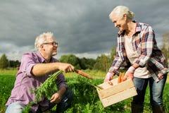 Ältere Paare mit Kasten Karotten auf Bauernhof Lizenzfreie Stockfotografie