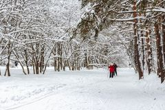 Ältere Paarskis im schneebedeckten Holz stockbild
