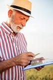 Ältere Untersuchungsweizenperlen des Landwirts oder des Agronomen und Fragebogen ergänzen lizenzfreie stockfotografie