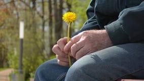 Älterer alter Mann im Ruhestand, der die kleine gelbe Blume sitzt auf dem Bankschreien hält stock footage