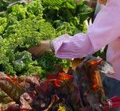 Älterer Bürger am Markt des Landwirts Stockfotos