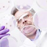 Älterer Biowissenschaftsforscher, der Bakterien verpflanzt. Stockfotografie