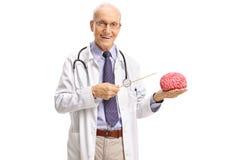Älterer Doktor, der auf ein Gehirnmodell mit einem Stock zeigt Lizenzfreie Stockbilder