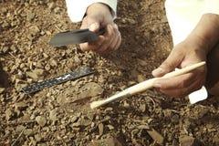 Älterer Forscher fand trilobite versteinert auf felsigem Standort lizenzfreies stockbild