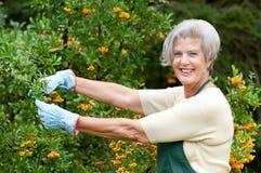 Älterer Gärtner Stockbild