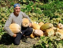 Älterer Gärtner mit Kürbisen Lizenzfreies Stockfoto