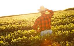 Älterer Landwirt, der auf einem Gebiet steht Stockbilder