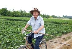 Älterer Landwirt, der ein Fahrrad reitet Stockfoto