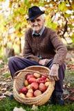 Älterer Landwirt mit Äpfeln Stockfoto