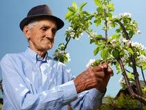 Älterer Landwirt mit einem Apfelbaum Stockfotografie