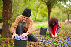 Älterer Landwirt und seine Tochter Lizenzfreie Stockbilder