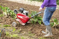 Älterer Landwirtgärtner, der im Garten mit rototiller, Pflügertraktor, cutivator, miiling Maschine arbeitet Lizenzfreie Stockfotografie