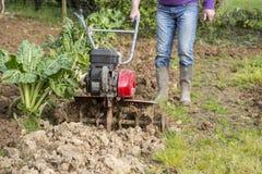 Älterer Landwirtgärtner, der im Garten mit rototiller, Pflügertraktor, cutivator, miiling Maschine arbeitet Stockfoto