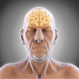 Älterer männlicher Brain Anatomy lizenzfreie abbildung