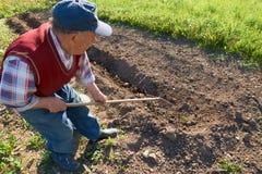 Älterer Mann begräbt junge Kartoffeln in den Boden mit einer Rührstange im Garten Lizenzfreies Stockbild