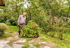 Älterer Mann, der alte Anlagen und Gras mit Schubkarre im Garten trägt Lizenzfreie Stockfotografie