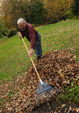 Älterer Mann, der Blätter harkt Stockbilder