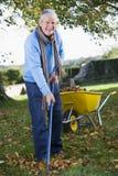Älterer Mann, der Blätter montiert Stockfoto