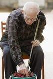 Älterer Mann, der Kirsche nimmt stockfoto