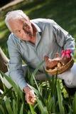Älterer Mann, der Ostereier versteckt stockfotografie