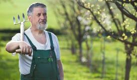 Älterer Mann, der in seinem Garten im Garten arbeitet stockfoto
