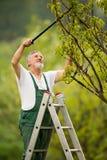 Älterer Mann, der in seinem Garten im Garten arbeitet stockfotos