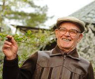 Älterer Mann in einem Garten Stockbilder