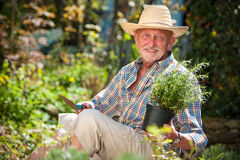 Älterer Mann im Garten Lizenzfreies Stockbild