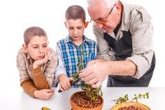 Älterer Mann mit seinen Enkelkindern stockfoto