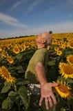Älterer Mann-Sonnenblumenfeld stockbild