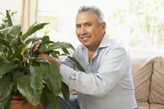 Älterer Mann zu Hause, der um Houseplant sich kümmert stockbild
